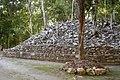 Petén Campechano, Calakmul, Campeche (22199408695).jpg