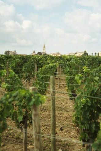 Pomerol AOC - One of the vineyards owned by Château Pétrus.