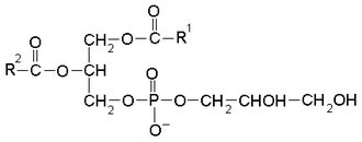 Phosphatidylglycerol - General chemical structure of a phosphatidyl glycerol where R1 and R2 are fatty acid side chains