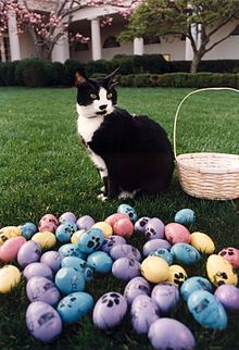 Photograph of Socks the Cat Posing Next to Easter Eggs Decorated with Paw Prints- 04-01-1994 (6461516025).jpg