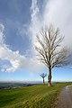 Pianura Padana - Scandiano (RE) Italia - 9 Febbraio 2014 - panoramio.jpg