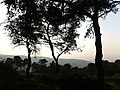 PikiWiki Israel 29715 Oak trees.JPG