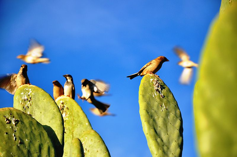 ציפורים על קקטוס