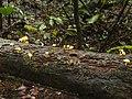 Pilz 7 Nationalpark Tai.jpg