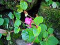 Pink flower (4699411933).jpg