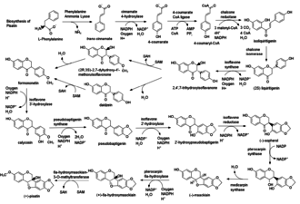 Pisatin - Image: Pisatin biosynthesis