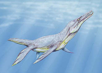 Cenomanian - Plesiopleurodon