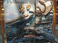 Plesiosaur exhibit.jpg