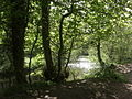 Plessey Woods Country Park - geograph.org.uk - 1314428.jpg