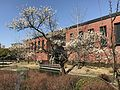Plum tree and Kurume City Museum of Art.jpg