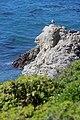 Point Lobos 04.JPG