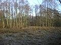 Poland. Konstancin-Jeziorna 069.JPG
