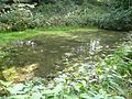 Pond in Oliver Wood, Lower Hopton - geograph.org.uk - 1003647.jpg