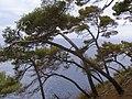 Portofino drzewa 2.jpg
