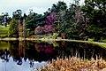 Powerscourt Gardens - Pond - View to northeast - geograph.org.uk - 1618351.jpg