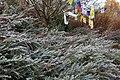 Prayer flags at Dawyck Gardens - geograph.org.uk - 1574167.jpg
