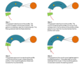 Process Steps Radius-Pultrusion.png