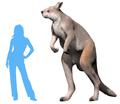 Procoptodon goliah NT.png