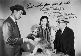 Wisconsin Center for Film and Theater Research - Boston Blackie (played by Kent Taylor), Mary Wesley (Lois Collier), and Inspector Faraday (Frank Orth), the cast of Boston Blackie, pose with Whitey the Dog in a 1951 promotional photograph for Ziv Television Programs. WCFTR Television Title Collection