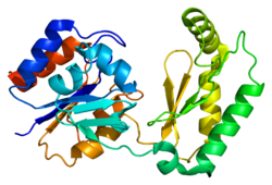 Protein PMM1 PDB 2fuc.png