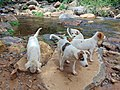 Puppies in the river.jpg