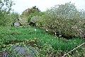 Pwll hwyaid a pherllan Tynrhos Duckpond and orchard - geograph.org.uk - 415835.jpg