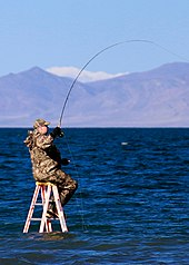 Photo of angler on ladder in lake
