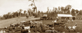 Queensland State Archives 5207 Panorama of McCarthys Farm Maleny Blackall Range c 1899.png