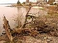 Río de la Plata-Uruguay.jpg
