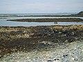 Reefs in Porth Penterfyn - geograph.org.uk - 1407166.jpg