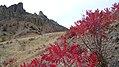 Rhus glabra at Saddlerock, Chelan County Washington 1.jpg