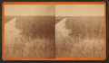 Rice field, by Wilson, J. N. (Jerome Nelson), 1827-1897.png