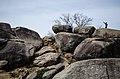 Rocks @ Gettysburg (8654014600).jpg