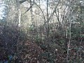 Roman earthwork defences, Silchester 02.jpg
