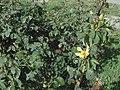 Rose garden leaves.jpg