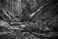 Ruisseau du Vialais - March 2021 - B - BW.jpg
