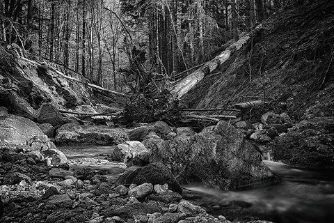Stream and fallen tree.