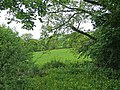 Rural view from the A470 road at Upper Penrhuddlan - geograph.org.uk - 1321585.jpg