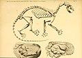 Säugethiere vom Celebes- und Philippinen-Archipel (Taf. VI) (5984629787).jpg