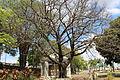S. J. do Rio Pardo (8165166406).jpg
