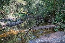 SL Sinharaja Forest asv2020-01 img08.jpg