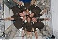 STS-124 crew in Kibo.jpg