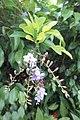 SZ 深圳 Shenzhen 南山區 Nanshan 蛇口體育中心 Shekou Sports Center Sept 2017 IX1 green plant white flowers 02.jpg