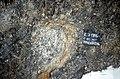 S of Mt Jackson megacrystic granite clast in felsic breccia.jpg