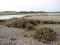 Salt marsh covered by shingle - geograph.org.uk - 1181061.jpg