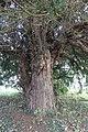 Sant Trillo a Sant Foddhyd, Saint Foddhyd's Church, Clocaenog, Sir Ddinbych, Wales 16.jpg