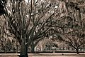 Sarasota Memorial-4627.jpg
