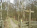 Saw Wood, Leeds Country Way - geograph.org.uk - 140439.jpg
