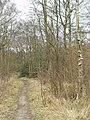 Saw Wood, Leeds Country Way - geograph.org.uk - 140440.jpg