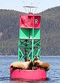 Sea lions buoy alaska.jpg